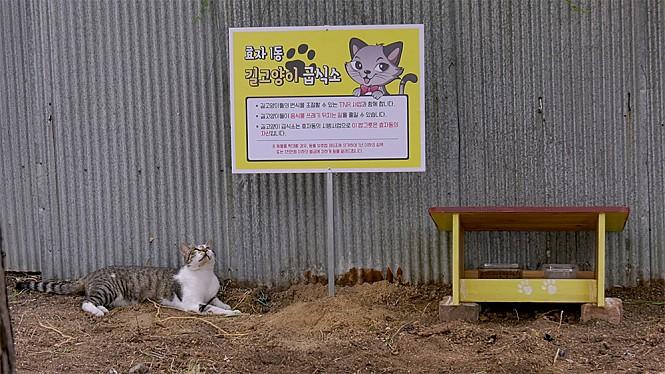 <고양이 집사> 스틸사진 2