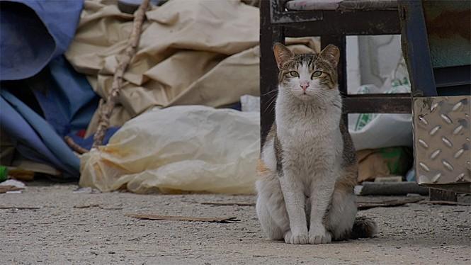 <고양이 집사> 스틸사진 3