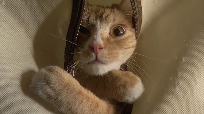 <고양이 집사> 스틸사진 5