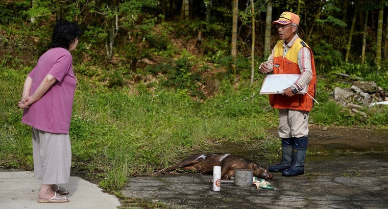 후쿠시마의 피폭돼지 스틸